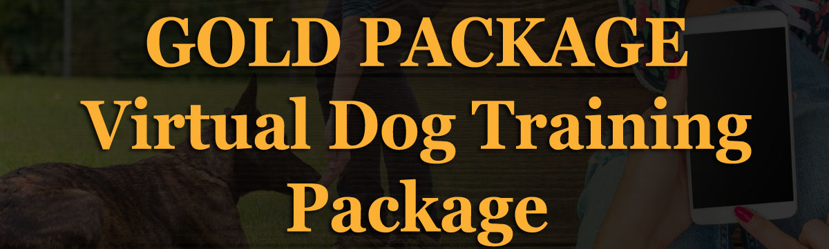 Gold Dog Training Package
