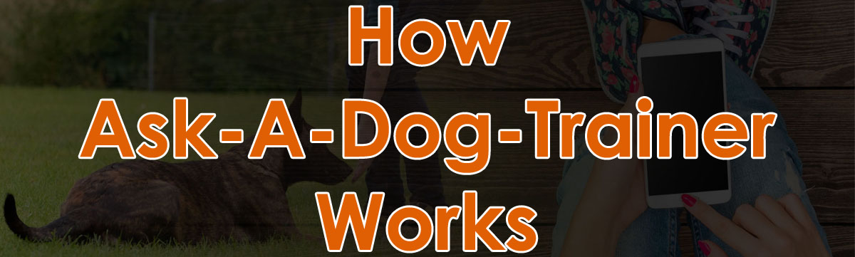 How Ask-Dog-Trainers Works