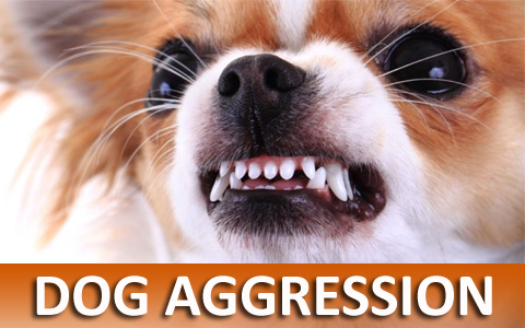 Dog Training Helps With Dog Aggression