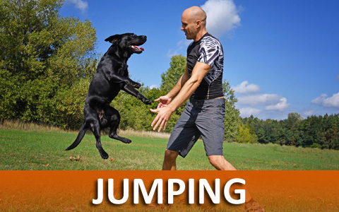 Dog Training Helps With Jumping