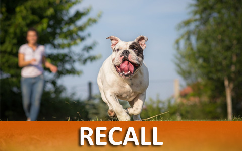 Dog Training Helps With Recall
